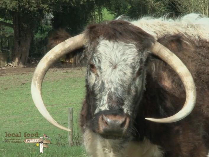 Halliloo Longhorn Beef